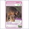 Woolworths Aussie Animals - Common Ring-Tailed Possum #63