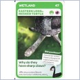 Woolworths Aussie Animals - Eastern Long-Necked Turtle #47
